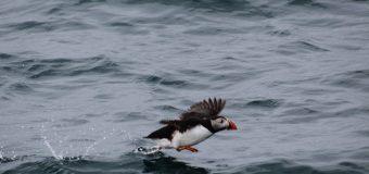 Angelo Preda – Norvegia: le isole Lofoten, Tromso e le balene
